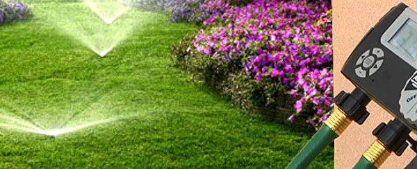 tree-shrub-watering